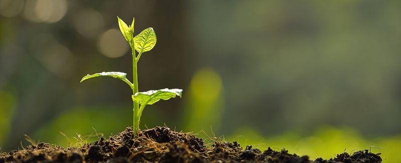 Garden & Sprouting