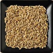 Buy organic oat groats in bulk