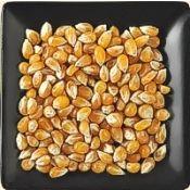 Buy bulk organic yellow popcorn kernels
