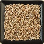 Buy bulk organic rye berries