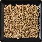 Buy bulk organic hard white wheat