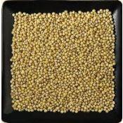 Buy bulk organic proso millet