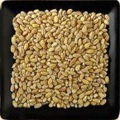 Buy bulk organic pearl barley