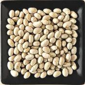 Buy bulk small white navy beans