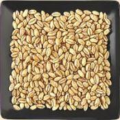 Buy bulk organic soft white wheat for pastry flour