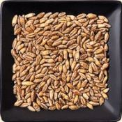 Buy bulk organic triticale