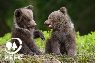 KoMo PEFC certification bear cubs
