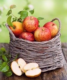 Apples in basket by orchard